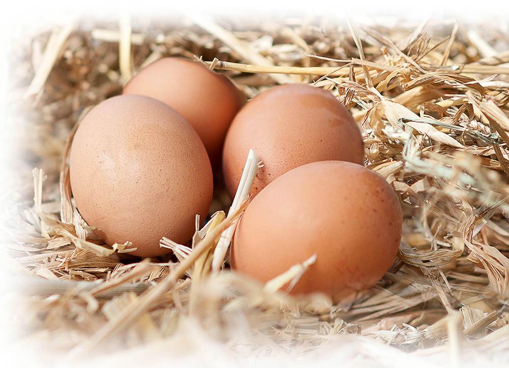 Eierschachteln vom Großhandel